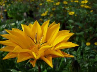 Yellow by cyankali