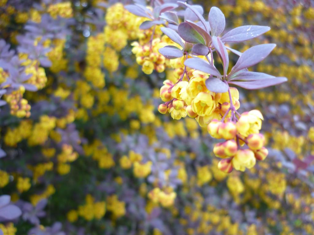 Flowering Bushes