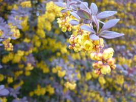 Flowering Bushes by cyankali