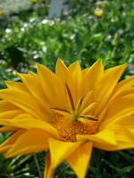 Yellow 2 by cyankali