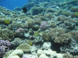 Beauty of the Coral Reef