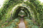 Green  tunnel 02