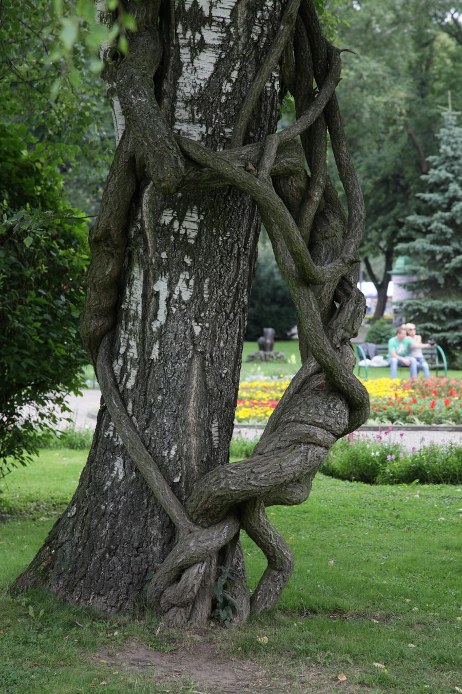 Simply a tree ?