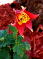 Bloom(1) 5-15-21