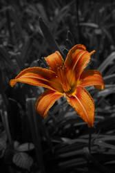 orange by n8schattengewaechs