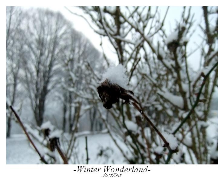 Winter Wonderland #2 by justzed