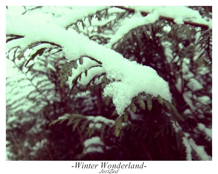 Winter Wonderland #3 by justzed