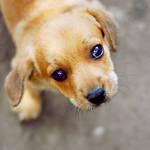 puppy eyes by ciuky
