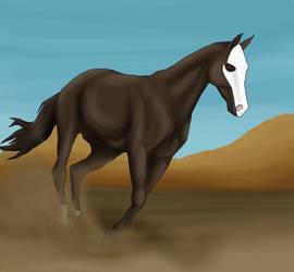 'In the desert