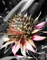 Strange Bloom by ExcaliburBlade