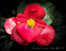 Red Blooming Flower by ExcaliburBlade