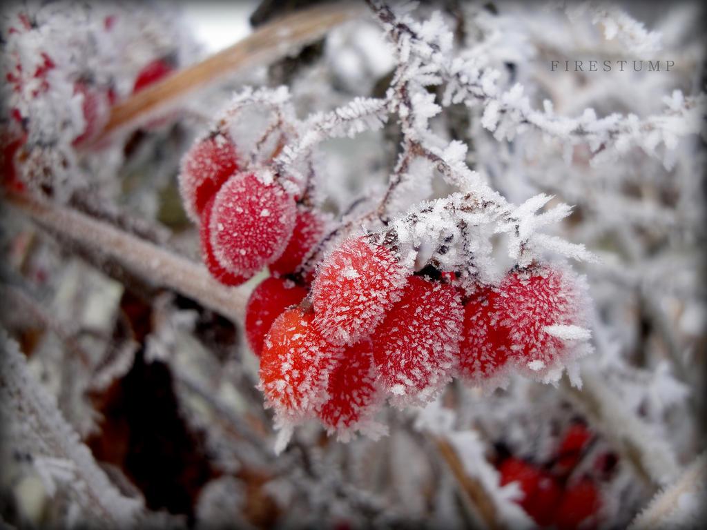 Winter's Bite by FireStump