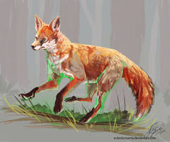 Where does the Fox go?