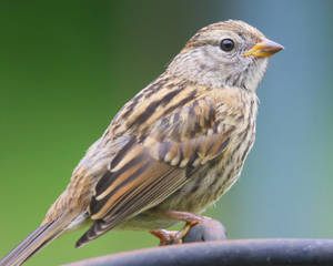 Finch Baby