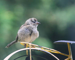 Bicycle Fluffy