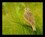 Savannah Grasses