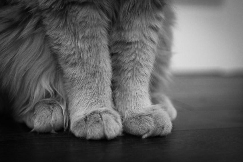 Feet by artbyadina