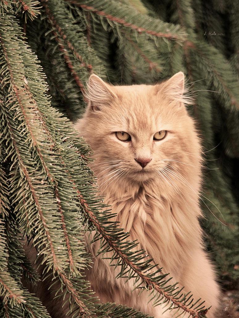 King Kat by Jhale66