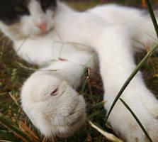 Cat paw by Rdzeniuch