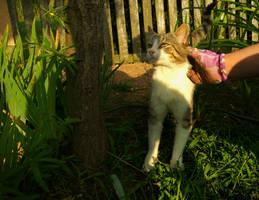 Cat  by Rdzeniuch