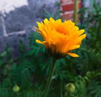Flower by Rdzeniuch