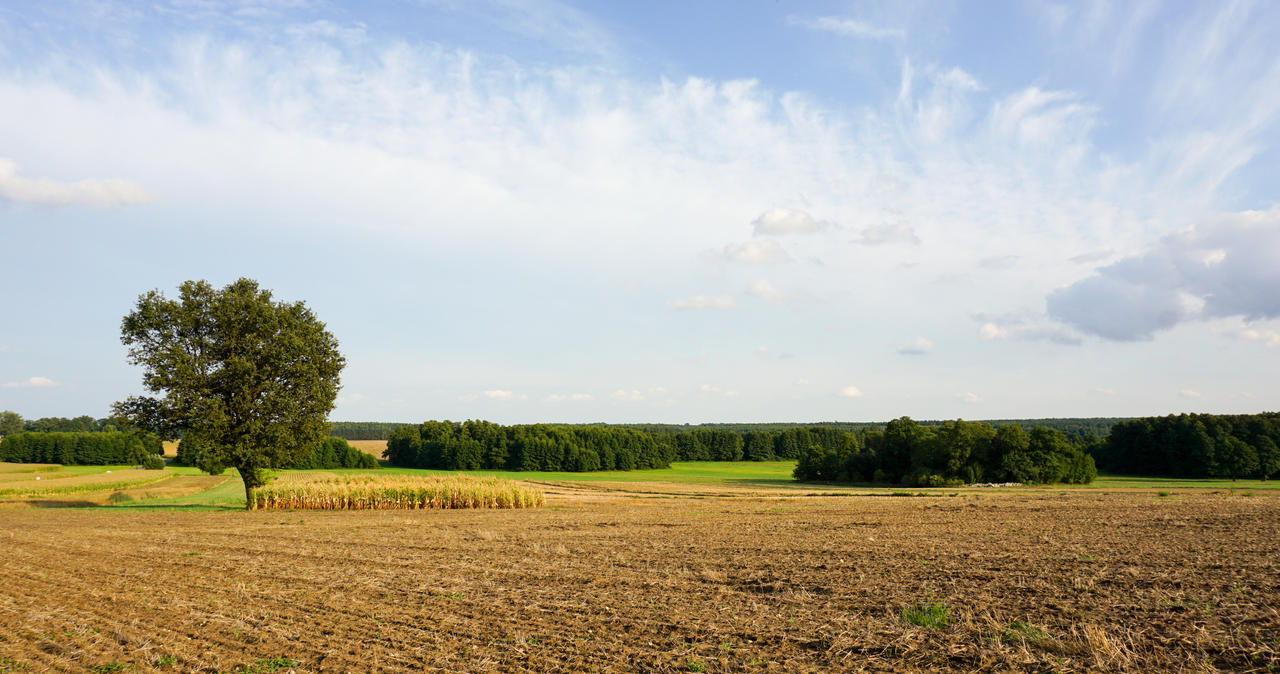 countryside_landscape_by_rdzeniuch-dclln