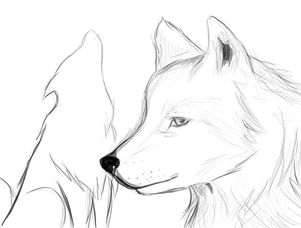 Wolves Quick Sketch By Kyonlovepanda On DeviantArt
