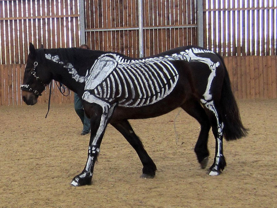 Skeleton Horse by Wildflower789