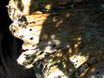 Staghead Leaf: Decay 2