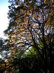 Rippon Lea: Autumn Canopy