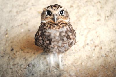 Meet Birdy by kauf-mich