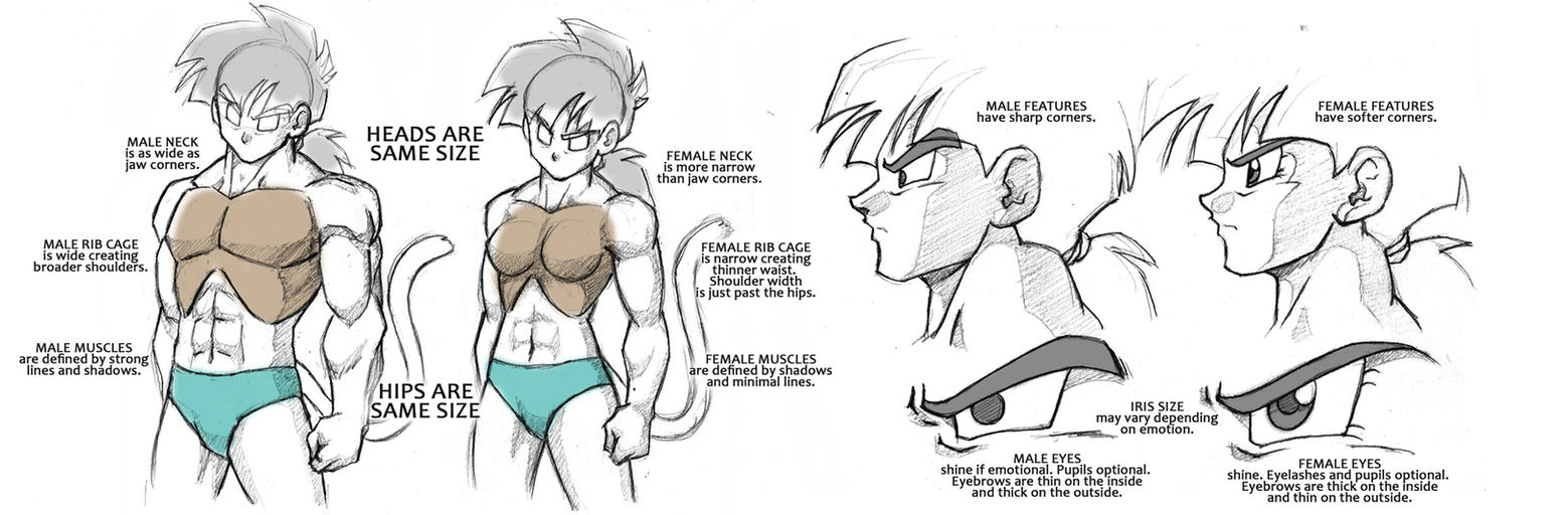 Dragonball Saiyan Anatomy Tutorial - Male/Female by Rider4Z on ...