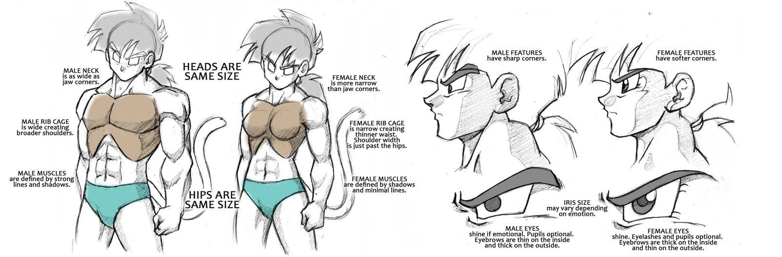 Dragonball Saiyan Anatomy Tutorial - Male/Female by Rider4Z on ...