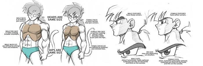 Dragonball Saiyan Anatomy Tutorial - Male/Female by Rider4Z