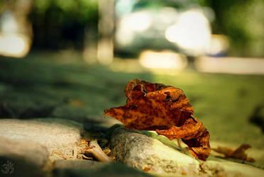 End of summer by rizyumnikov