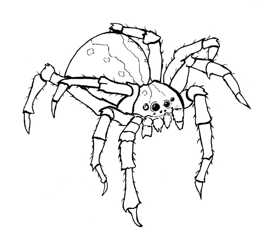 creepy spiders coloring pages - photo#15