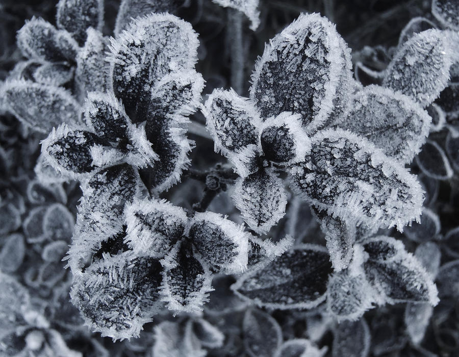 Frost in Black and White by auto64