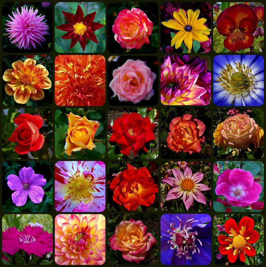 Fleur de' Favs by auto64