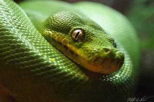 emerald by mishkuu
