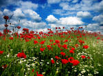 Field of Poppies - I