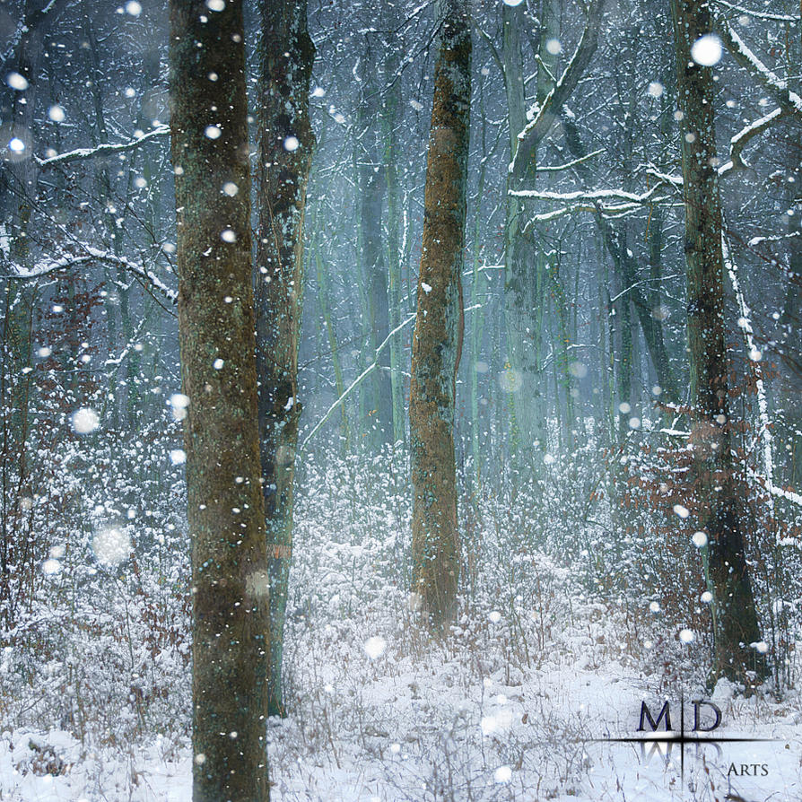 Snow-covered Forest by MD-Arts