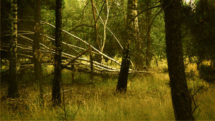 forest whispers my name 2 by Jaskra