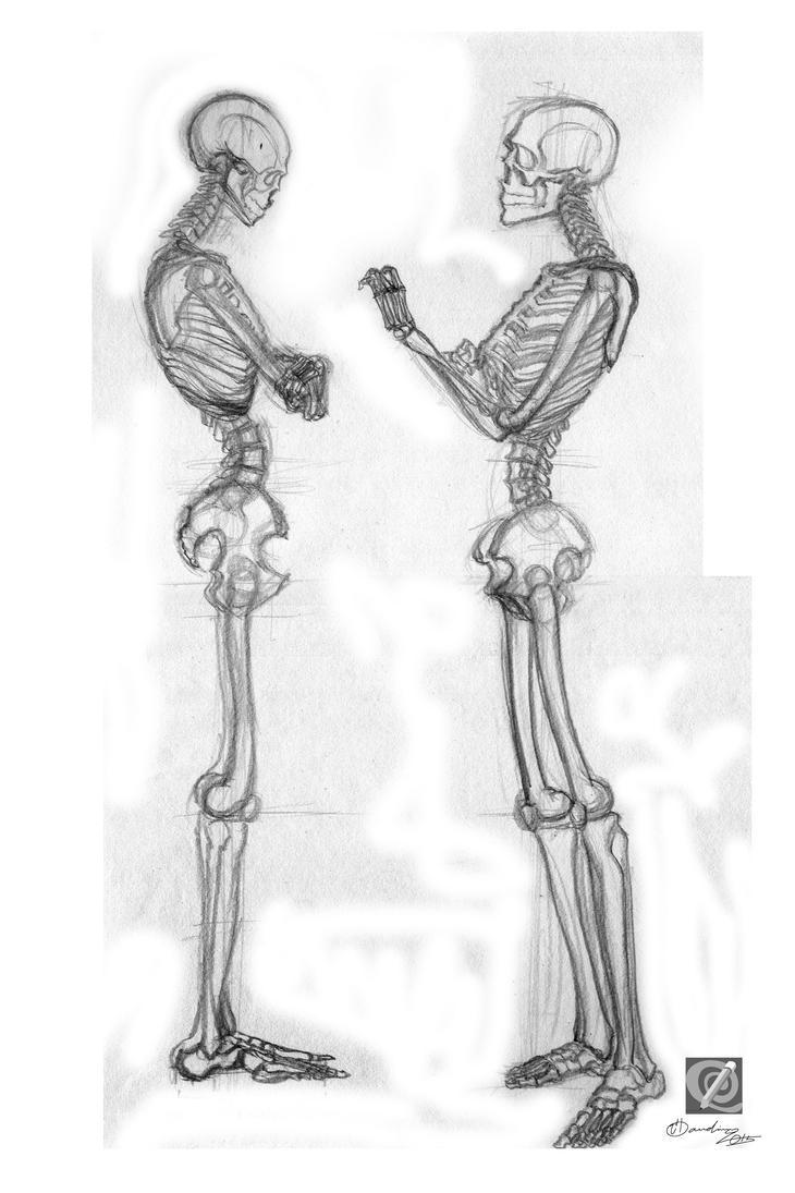 skeleton study 001 by chclaudino