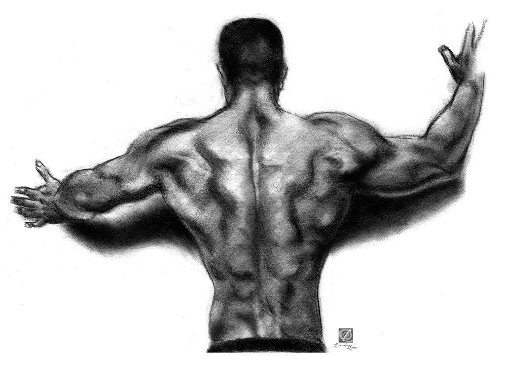 muscular structure back - tonal study by chclaudino