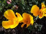 Beautiful Things: Flowers.