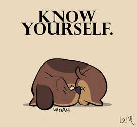 Dog Wisdom.