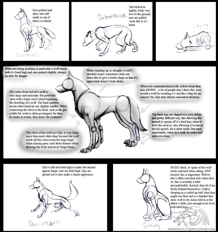 How To Draw Real Feral Wolves by CorruptTempest on DeviantArt