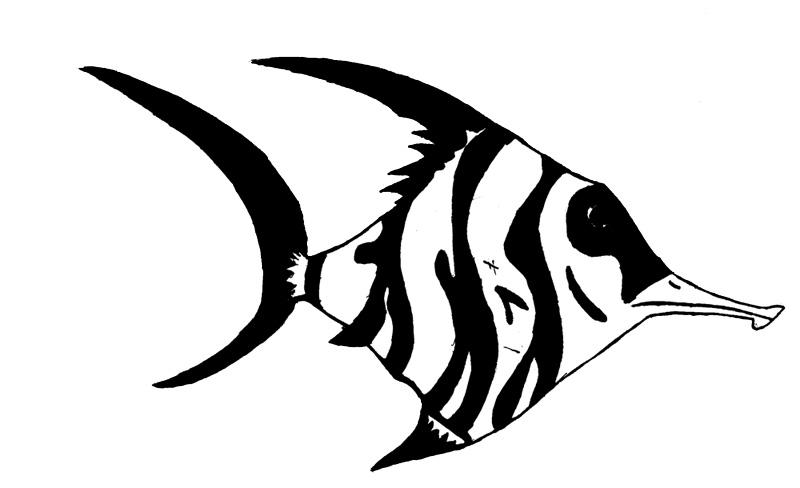 Angel fish drawings - photo#11