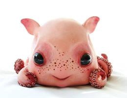 Baby Dumbo octopus