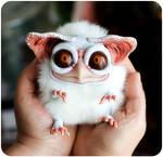 Sowl micro